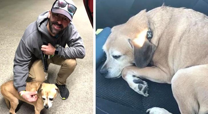 En kille förflyttar sig mer än 2000 km för att återförena en hund med sin matte som är allvarligt sjuk