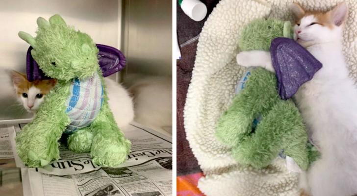 El gato tiene tanto miedo de ir al veterinario que viaja siempre acompañado con su dragón de peluche