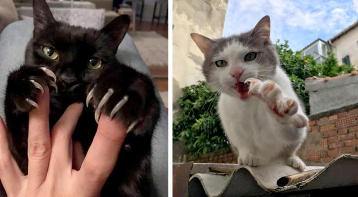 12 Katzen, die ihre Krallen zeigen, erinnern die Menschen daran , dass sich hinter süßen Augen ein Raubtier versteckt