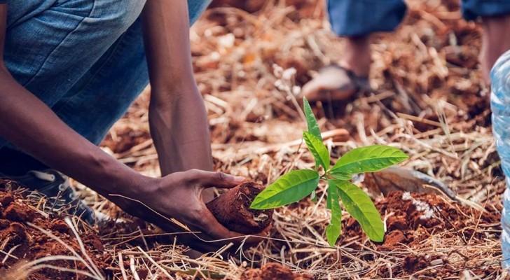 Tout le monde ne sait pas qu'il existe un moteur de recherche qui utilise son argent pour planter des arbres : il en a planté plus de 100 millions dans le monde