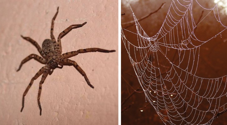 All the reasons why you should never kill any spiders you find in the house