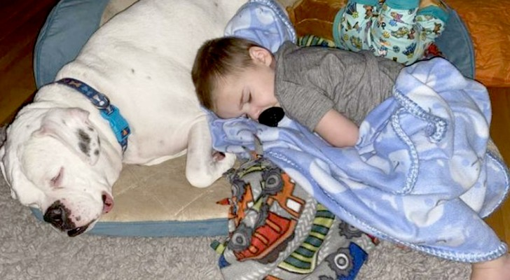 Every night this boxer sleeps curled up next to his human brother: they are practically inseparable