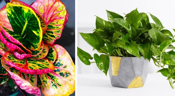 7 kamerplanten die zelfs in de donkerste hoeken van het huis kunnen overleven
