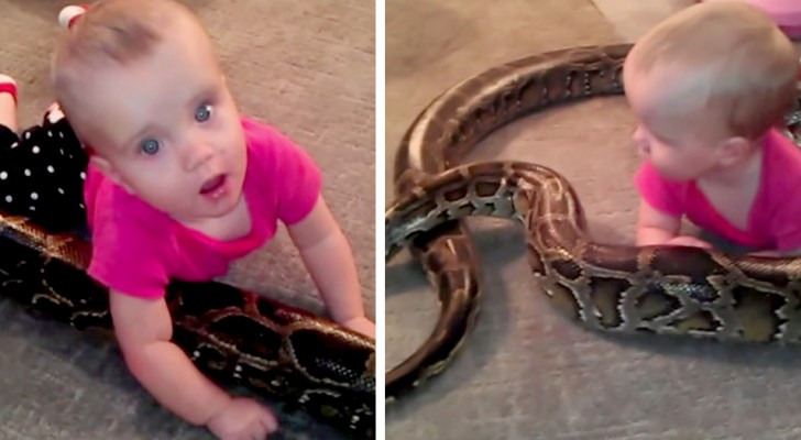 A father lets his 1-year-old daughter play with his python snake: the photos spark controversy across the web