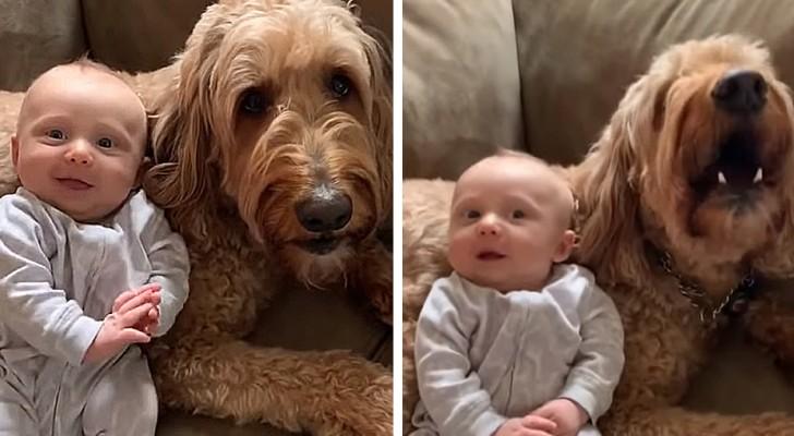 Dieser goldige Hund sagt seinem kleinen Menschenfreund immer wieder Ich hab dich lieb