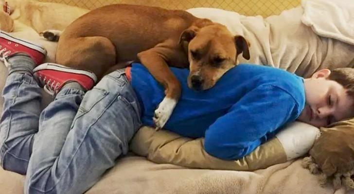 Un enfant autiste rencontre un chien ayant des antécédents de maltraitance : une nouvelle vie commence pour tous les deux