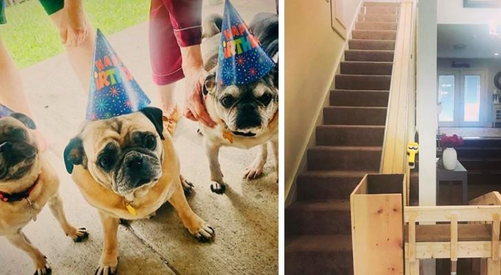 Costruisce un ascensore in casa per aiutare i suoi 3 anziani cagnolini a fare le scale: il risultato è adorabile