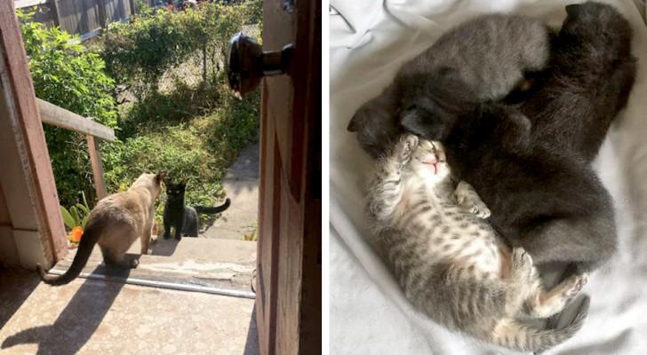 Une chatte errante demande l'hospitalité chez une femme pour donner naissance à ses petits en toute sécurité