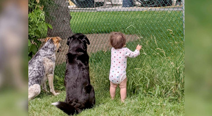 A little girl sees that the neighbor offers her 4-legged brothers a treat every day and decides to follow in their footsteps