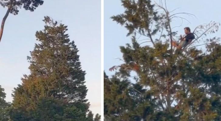 Un uomo scala un albero di 20 metri per fare un picnicnel parco mantenendo le distanze di sicurezza