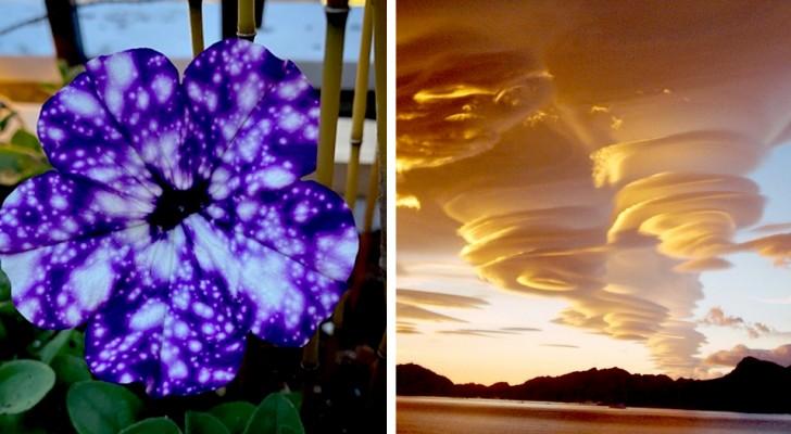 12 images qui couronnent Dame Nature comme championne de l'imagination et de la créativité