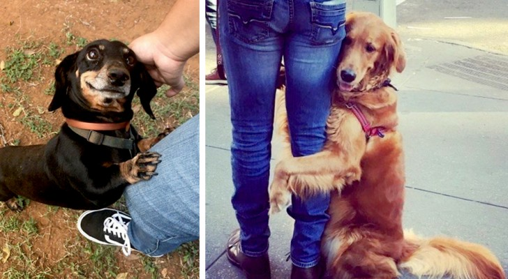 12 pet dogs that demonstrated their love for their owners in the sweetest ways possible