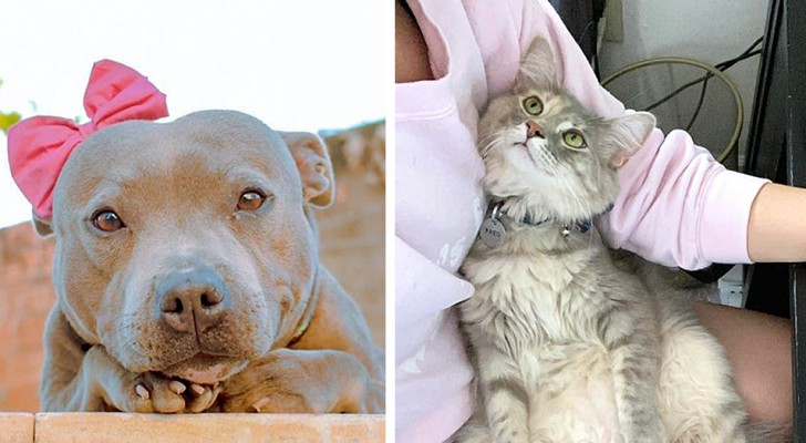 15 photos where dogs and cats have given their owners the most adorable looks