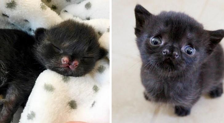 Een zwart katje verovert iedereen met haar grappige snuitje: ze werd helemaal alleen gevonden op een verlaten binnenplaats