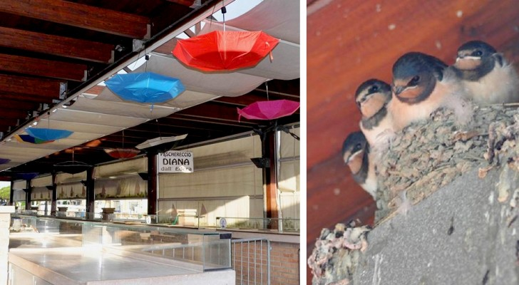 This market hung colorful umbrellas under birds' nests to protect the hatchlings from falling