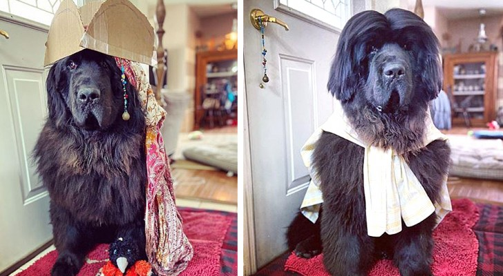 Este cachorrinho fofo mostra um penteado diferente todos os dias: um mais adorável que o outro
