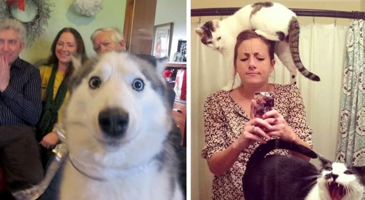 13 adorable animals who have no idea what privacy is