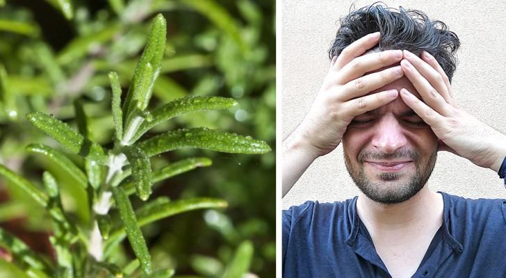 3 nuttige toepassingen van rozemarijn die ideaal zijn voor het verlichten van symptomen van hoofdpijn
