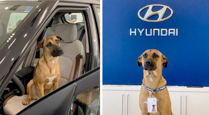 Un cane randagio fa visita ogni giorno agli impiegati di un concessionario: alla fine lo assumono con tanto di badge