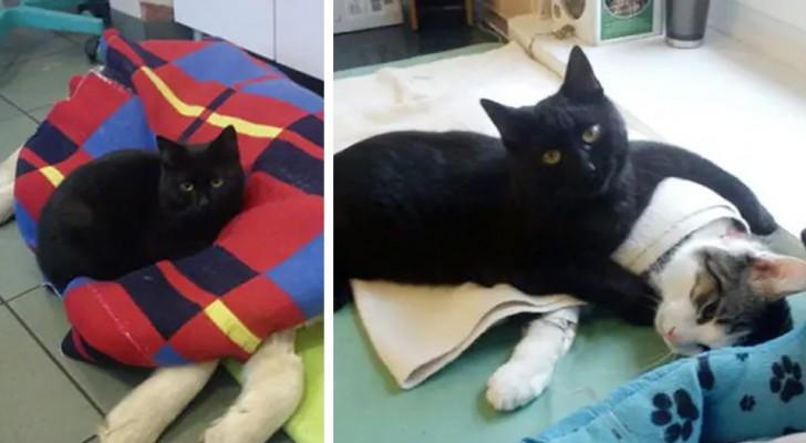 Questo gattino nero si