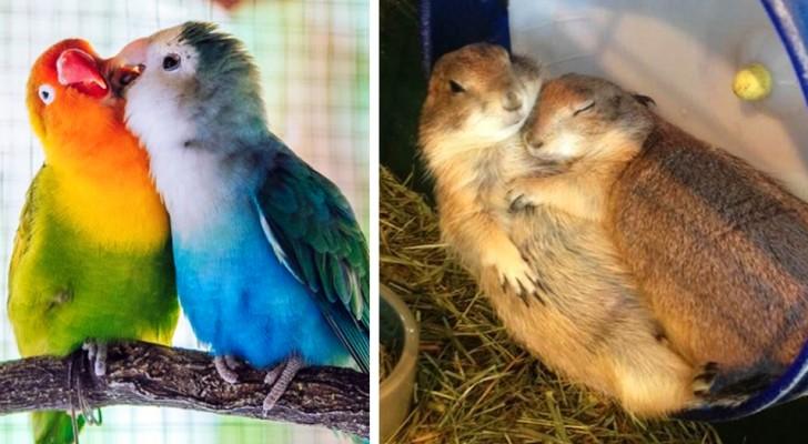 15 photos montrent comment le véritable amour existe aussi dans le monde animal