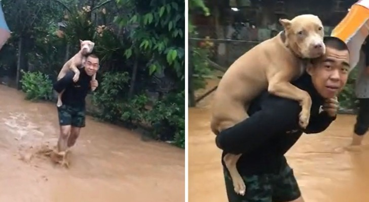 Um homem carrega seu cachorro nos ombros para salvá-lo das inundações