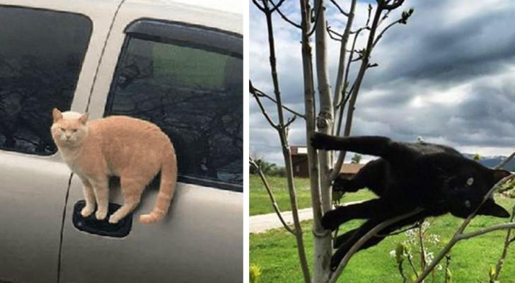 Gatti che sfidano le leggi della fisica: 13 foto divertenti di felini ripresi nelle pose più assurde