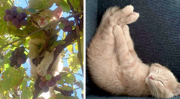15 cats intent on taking a nap in the cutest and wackiest positions