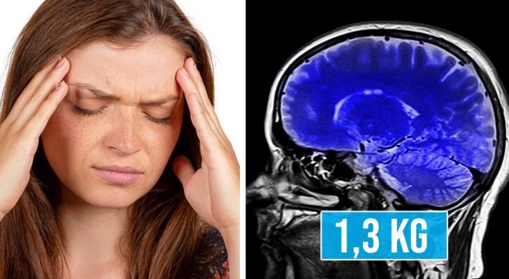 7 kuriose Fakten über das menschliche Gehirn, die uns dazu treiben, uns noch mehr um es zu kümmern