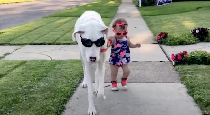 Um cachorro surdo e com deficiência visual e sua dona se tornam melhores amigos: eles não se separam nem por um momento