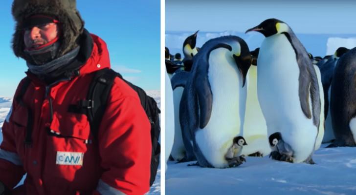 Une équipe de documentaristes de la BBC enfreint les directives et sauve un groupe de pingouins d'une mort certaine