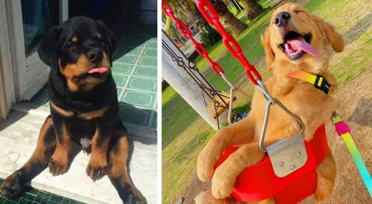 12 photos that show just how adorably funny are canine friends really are