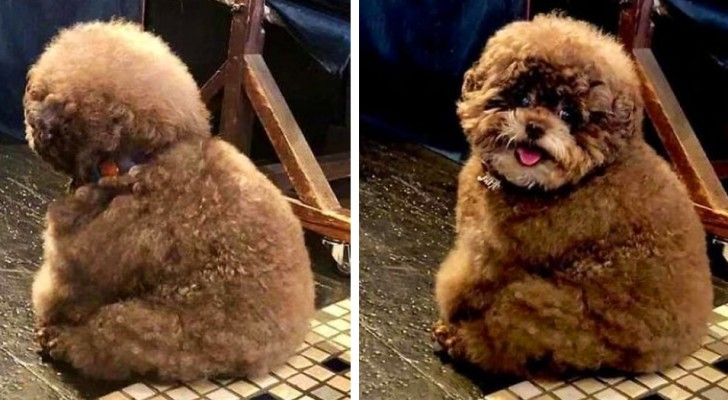 Questo cagnolino è diventato una vera celebrità: le sue espressioni ricordano quelle di un essere umano