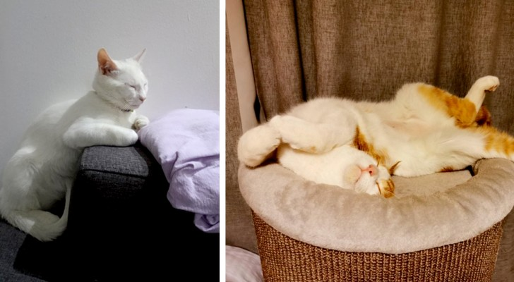 13 katten die ervoor hebben gekozen om in slaap te vallen in de grappigste hoekjes en posities