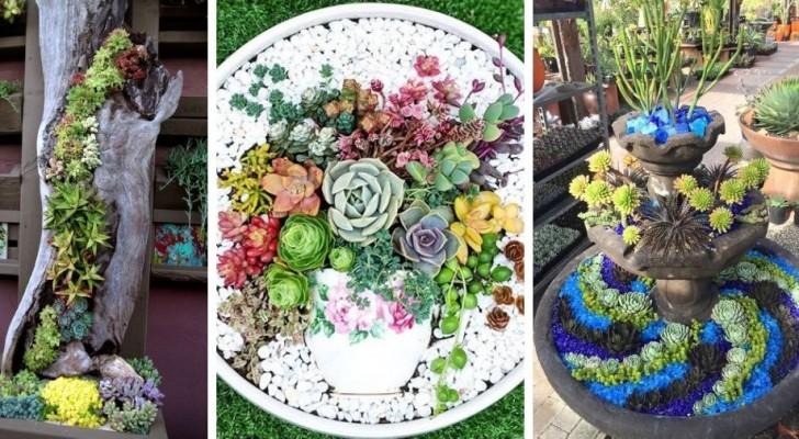 11 compositions de plantes grasses incroyables pour décorer votre jardin avec brio