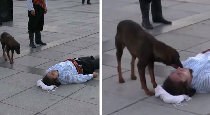 Ein streunender Hund tröstet einen Schauspieler, der während einer Theatervorstellung einen Verletzten spielte