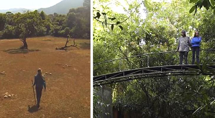 Un couple achète un terrain de 120 hectares pour replanter la forêt : c'est aujourd'hui une immense réserve naturelle