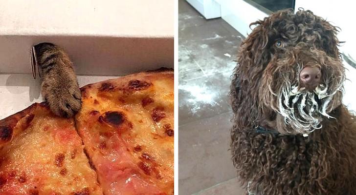 17 dieren die op heterdaad werden betrapt op het stelen van voedsel van hun menselijke vrienden