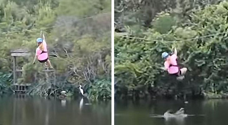 A woman on a zipline is surprised by an alligator jumping out of the water to bite her