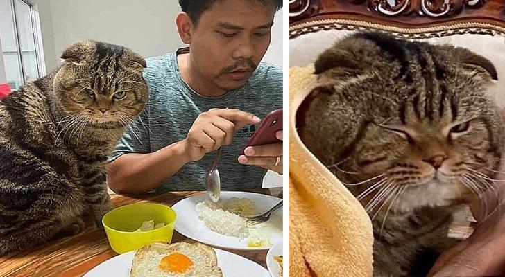 Eine Frau erzählt mit urkomischen Fotos, wie ihre Katze es geschafft hat, ihren Mann zu stehlen...