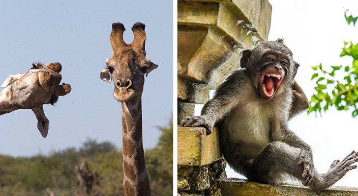 Deze 22 foto's van de finalisten van de Comedy Wildlife Awards tonen de meest komische dieren die er zijn