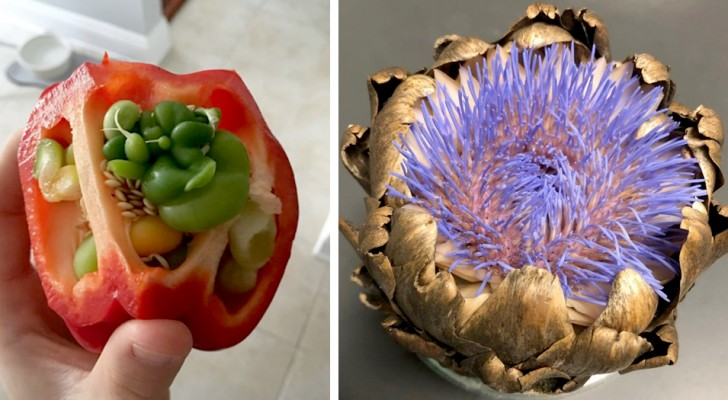 20 volte in cui la frutta e la verdura hanno germogliato troppo presto e dato vita a fiori fuori dal comune