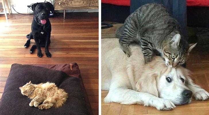 18 chats qui n'ont pas réussi à bien se comporter avec leurs amis chiens