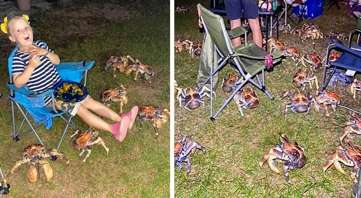 Australien: Dutzende riesiger hungriger Krebse überfallen den Grill einiger Camper