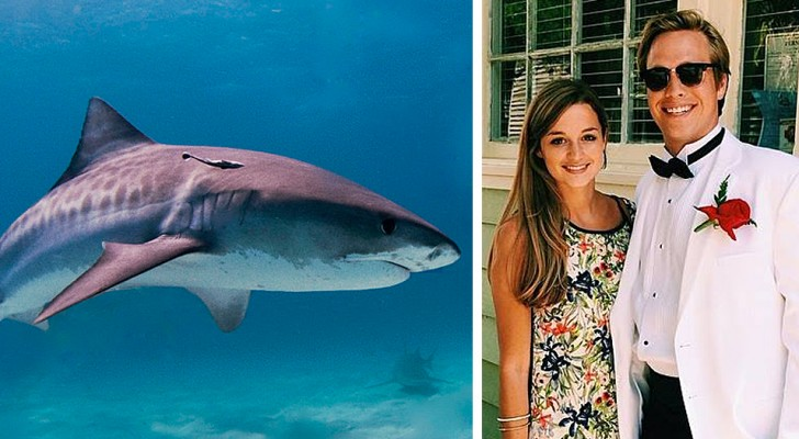 A man is attacked by a shark while swimming: his pregnant wife dives in and saves him