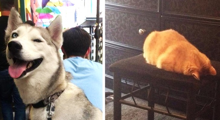 18 photos of cats and dogs who don't even realize how bizarre their behavior is