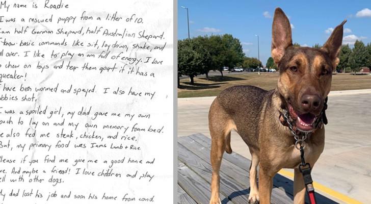 Trovano una cagnolina con una commovente richiesta d'aiuto appesa al collo e le regalano una nuova vita