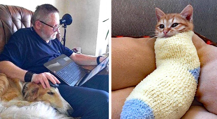 16 animals that have made themselves comfortable in the strangest and most hilarious spots