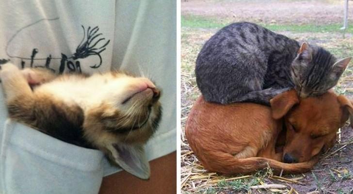 19 grappige foto's laten zien hoe katten overal en onder alle omstandigheden in slaap kunnen vallen