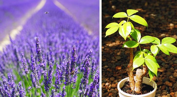 6 plantas que segundo a tradição são ótimas para atrair riqueza, saúde e amor